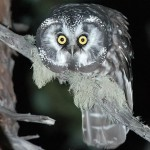 funny-pictures-staring-awkward-owl