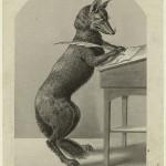writing-fox