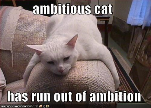 ambitious-cat