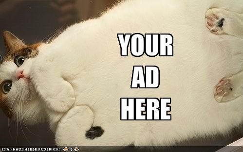 advertising cat